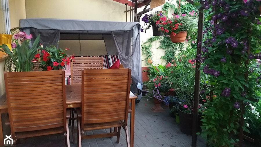 #tajemniczyogród - Mały ogród za domem z huśtawką - zdjęcie od Beata Broda 2