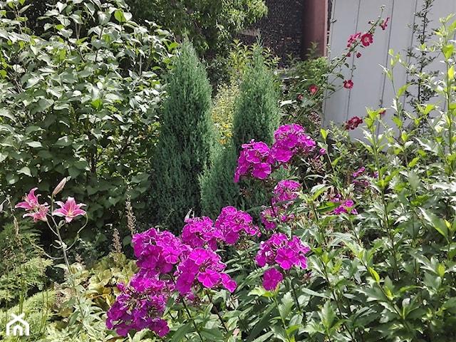 modne kwiaty ogrodowe 2021