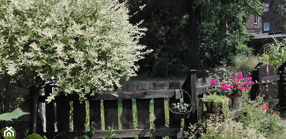 Modny ogród – trendy ogrodowe i nowości na 2020 rok