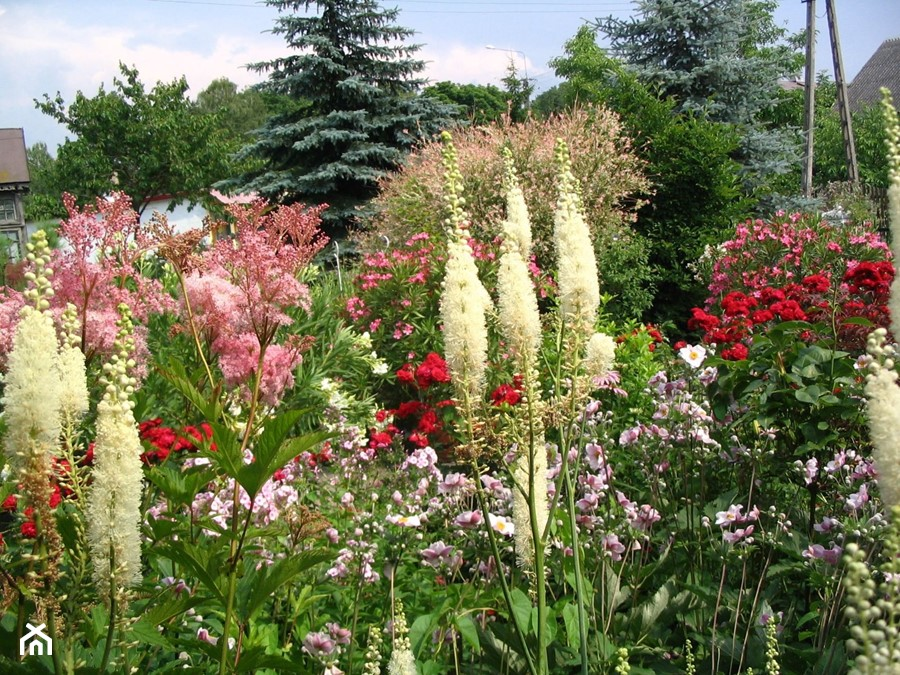 Tajemniczyogrod Ogrod Zdjecie Od Dana Kwiaty Homebook