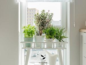 Zioła w kuchni – przegląd ziół do uprawy w doniczkach