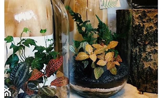 rośliny w szklanym słoju
