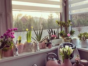Kwiaty do kuchni: jakie gatunki roślin sprawdzą się w kuchni?