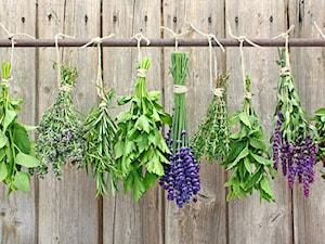 Suszenie ziół: jak suszyć zioła w domu?
