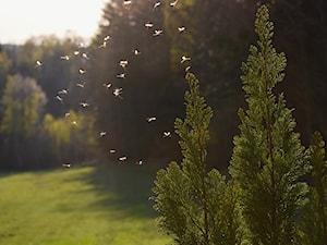 Jak odstraszyć komary? 9 domowych sposobów na komary