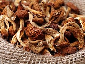 Jak suszyć grzyby? Domowe sposoby suszenia grzybów