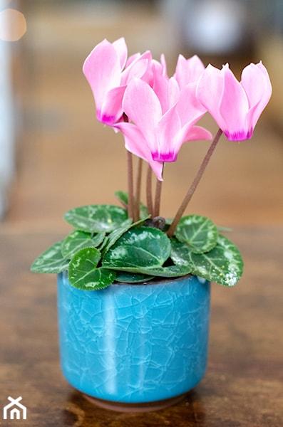 Kwiaty Do Kuchni Jakie Gatunki Roslin Sprawdza Sie W Kuchni Homebook