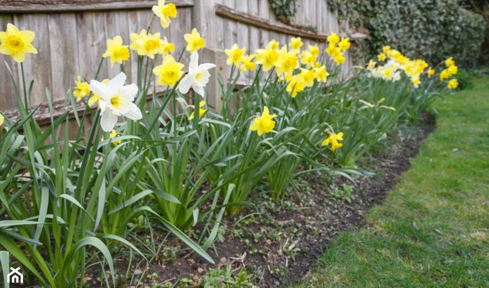 Kwiaty wiosenne – najpopularniejsze odmiany ogrodowe - homebook