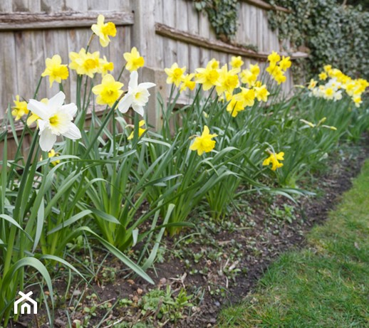 Kwiaty wiosenne – 10 najpopularniejszych kwiatów ogrodowych kwitnących na wiosnę