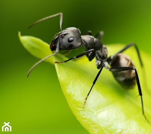 Mrówki w ogrodzie – jak zwalczyć mrówki w ogrodzie? Poznaj skuteczne sposoby