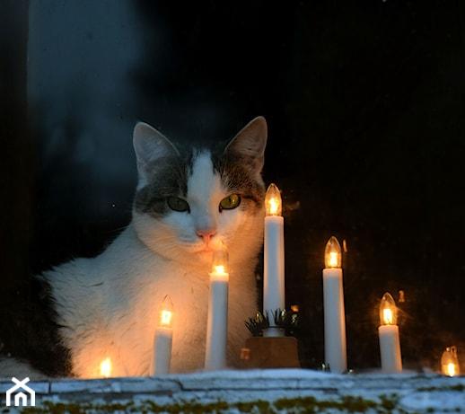 Świecznik adwentowy – kiedy i dlaczego go zapalamy?