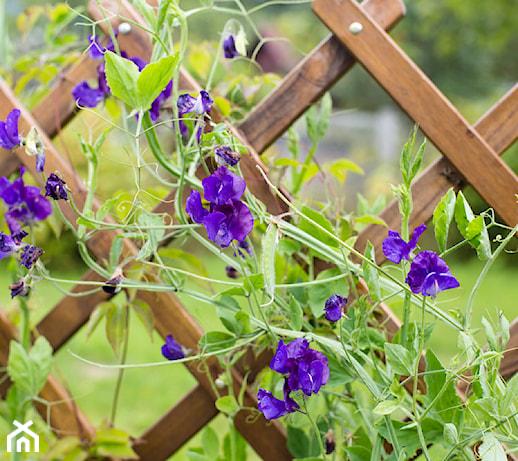 Trejaż ogrodowy – urokliwy element małej architektury