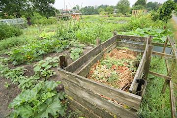 Kompostownik – co warto wiedzieć o kompostowaniu w ogrodzie?