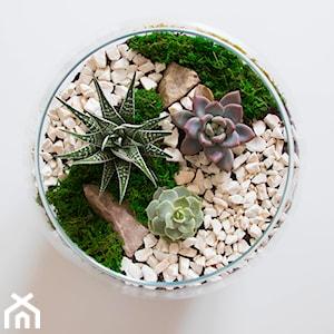 Rośliny i kwiaty w szkle – jakie gatunki sprawdzą się w ogrodzie w szkle?