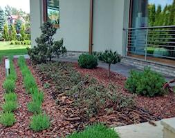 Ogród w sercu miasta - Ogród, styl nowoczesny - zdjęcie od Czas na zielen