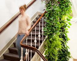PLANTWIRES+by+GREEN+FORTUNE+-+zdj%C4%99cie+od+N+I+K+I