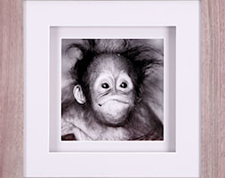 Orangutanek+-+zdj%C4%99cie+od+Nasciane.eu