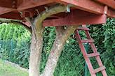 domek na drzewie z drabiną