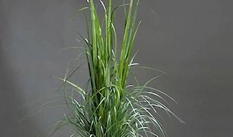 Hurtownia Roślin Sztucznych - Sklep