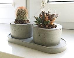 Komplet doniczek z betonu na sukulenty z podstawką - zdjęcie od Rausch Beton - Homebook