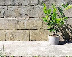 """Doniczka z betonu 'Felippe"""" - zdjęcie od Rausch Beton - Homebook"""