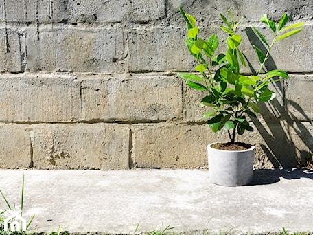 """Aranżacje wnętrz - Ogród: Doniczka z betonu 'Felippe"""" - Rausch Beton. Przeglądaj, dodawaj i zapisuj najlepsze zdjęcia, pomysły i inspiracje designerskie. W bazie mamy już prawie milion fotografii!"""