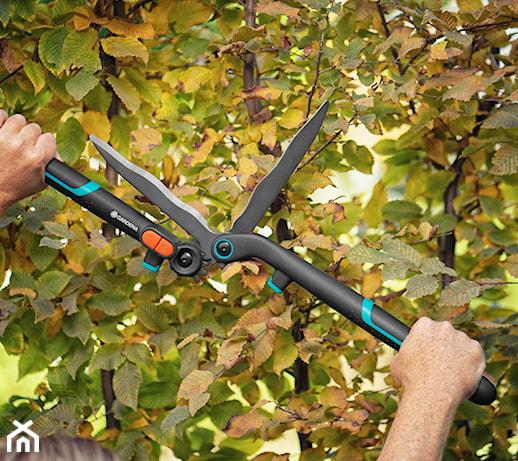 Jesienne cięcie drzew i krzewów – co musisz wiedzieć, zanim sięgniesz po nożyce i sekator?