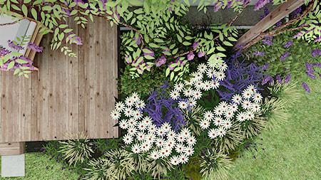 Małe zielone studio