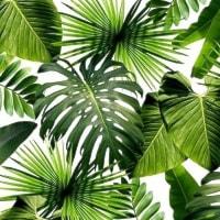 Motyw dżungli