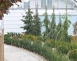 Ogród w górach - Średni ogród przed domem - zdjęcie od Pracownia Projektowa Architektury Krajobrazu Januszówka