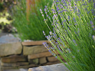 Ogród z pergolą na tarasie
