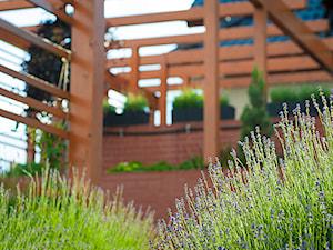 Ogród z pergolą na tarasie - Średni ogród za domem - zdjęcie od Pracownia Projektowa Architektury Krajobrazu Januszówka