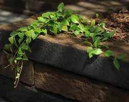 Ogr%C3%B3d+-+zdj%C4%99cie+od+Green+Point+Garden+Design
