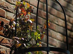 Stylowy ogrod, Clifton - Ogród, styl klasyczny - zdjęcie od Green Point Garden Design
