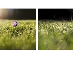 -+zdj%C4%99cie+od+Marcin+Sroka+-+Fotograf