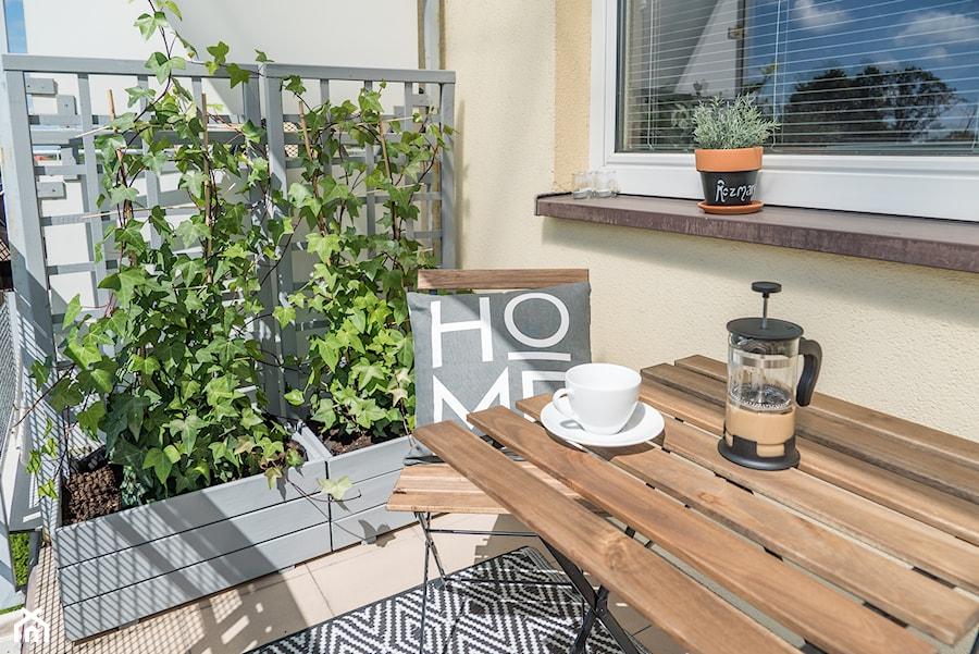 Pnącza Na Balkon Jakie Rośliny Pnące Na Balkon Wybrać