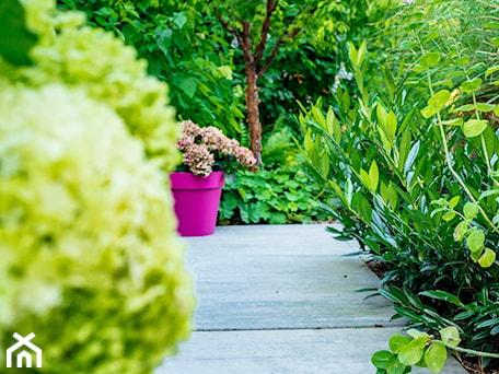 Aranżacje wnętrz - Ogród: Ogród pełen zieleni - Miejskie Ziele. Przeglądaj, dodawaj i zapisuj najlepsze zdjęcia, pomysły i inspiracje designerskie. W bazie mamy już prawie milion fotografii!