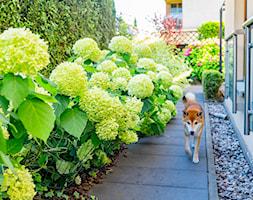 Wąskie przejście pomiędzy ogrodami - zdjęcie od Miejskie Ziele - Homebook