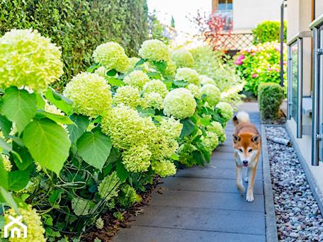 Aranżacje wnętrz - Ogród: Wąskie przejście pomiędzy ogrodami - Miejskie Ziele. Przeglądaj, dodawaj i zapisuj najlepsze zdjęcia, pomysły i inspiracje designerskie. W bazie mamy już prawie milion fotografii!