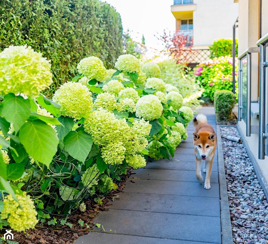 Wąskie przejście pomiędzy ogrodami - zdjęcie od Miejskie Ziele