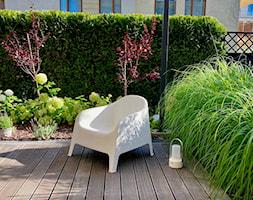 Ogród bez trawnika - zdjęcie od Miejskie Ziele - Homebook