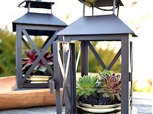 Jak zrobić ozdobę do ogrodu z lampionu i sukulentów?
