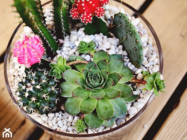 Jak zrobić dekorację z sukulentów w szklanym naczyniu?