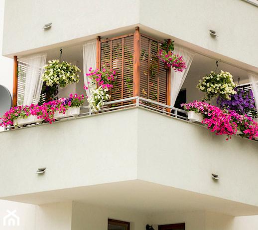 Jak sadzić pelargonie, aby cieszyć się obfitym kwitnieniem aż do końca sezonu?