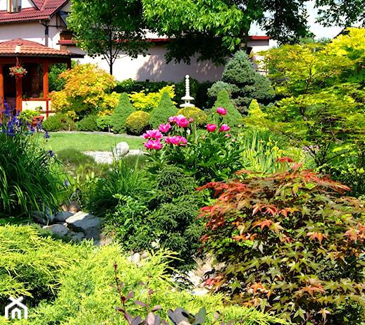 Rośliny sucholubne – TOP 10 roślin, które przetrwają suszę w ogrodzie