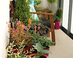 Moja strefa - Mały taras z przodu domu z tyłu domu - zdjęcie od Tomek Piętka