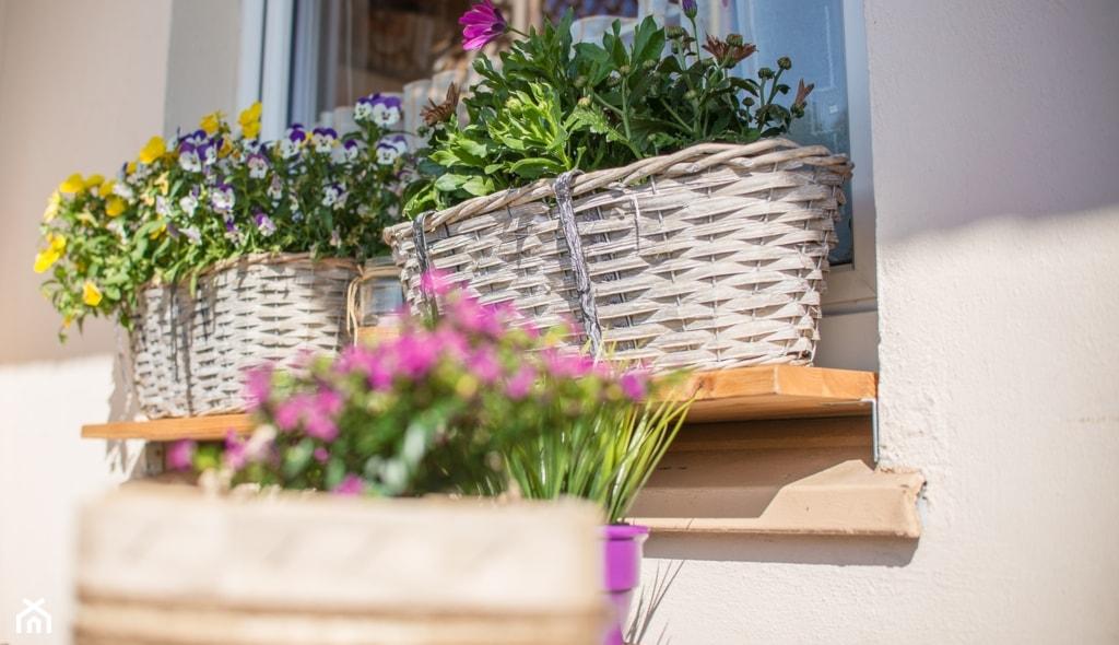Jakie Kwiaty Wybrać Na Balkon Te Rośliny Sprawdzą Się