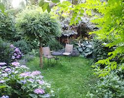 zielony z kotem - Średni ogród za domem tropikalny - zdjęcie od Izabella Grenke