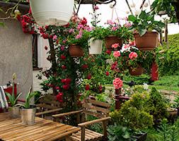 kwietna pergola - zdjęcie od Małgorzata Śleboda