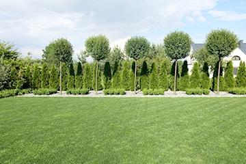 Kiedy i jak sadzić tuje? Porady ogrodowe
